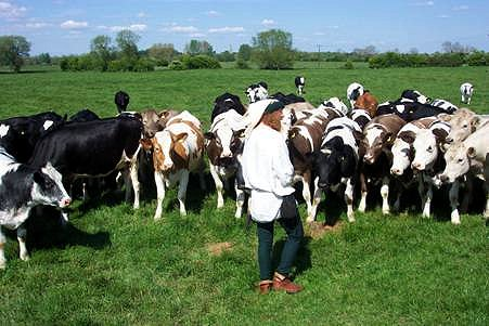 Talesman tells a poem to some cows